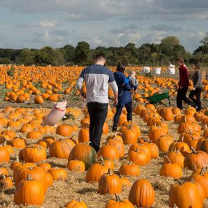 15-Pumpkin-Patch-300917