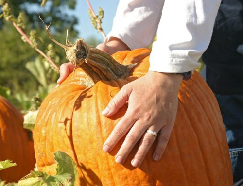 How to pick pumpkins
