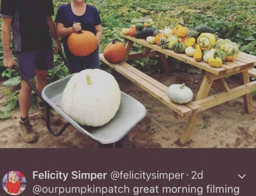 BBC Filming at Pumpkin Patch