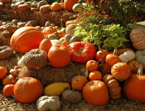 Best PYO pumpkin prices in the area