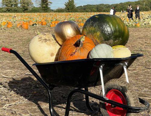 Who's ready to fill those wheelbarrows?